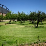 Fruit trees on the estate. One of the main reasons for the distinct flavor of Herradura