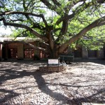These beautiful Amati trees lend the area a lot of its character